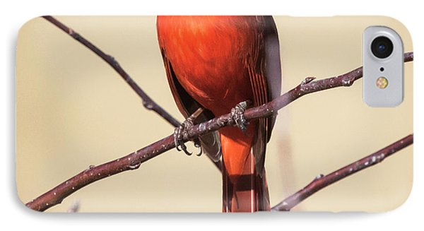Northern Cardinal Profile IPhone Case