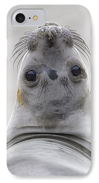 Northern Elephant Seal Looking Back Phone Case by Ingo Arndt