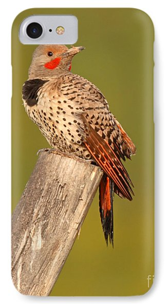 Northern Flicker Looking Back IPhone Case by Max Allen