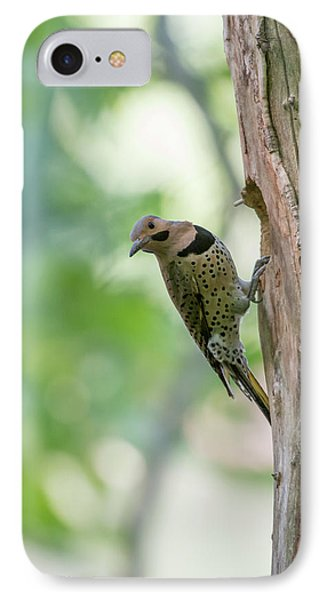 Northern Flicker Outside The Home IPhone Case by Dan Friend