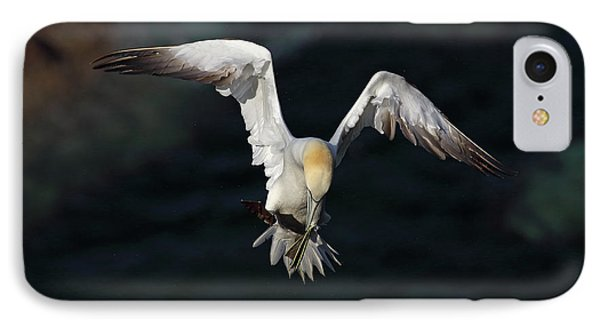 IPhone Case featuring the photograph Northern Gannet In Flight 2 by Grant Glendinning