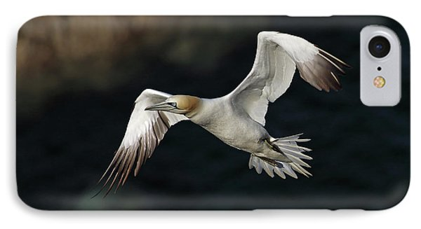 IPhone Case featuring the photograph Northern Gannet In Flight by Grant Glendinning