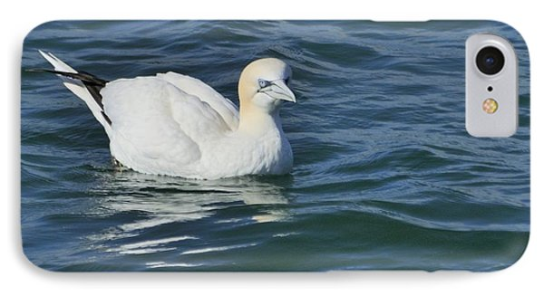 IPhone Case featuring the photograph Northern Gannet Resting On The Water by Bradford Martin