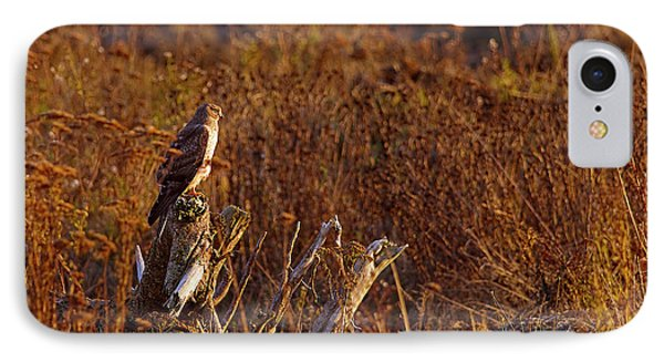 IPhone Case featuring the photograph Northern Harrier At Sunset by Sharon Talson