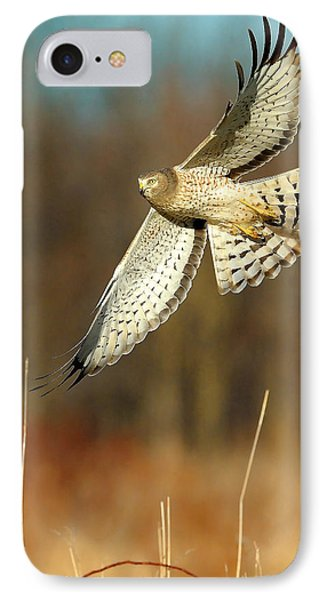 Northern Harrier Banking IPhone Case