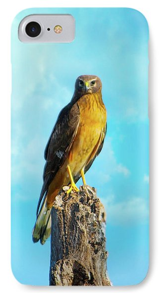 Northern Harrier Hawk IPhone Case by Mark Andrew Thomas