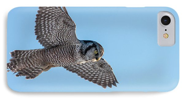 IPhone Case featuring the photograph Northern Hawk Owl Hunting by Mircea Costina Photography