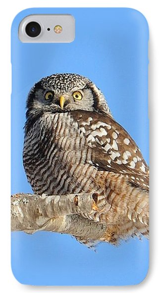 Northern Hawk-owl On Limb IPhone Case by Debbie Stahre