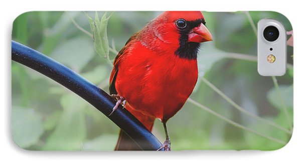 Northern Male Red Cardinal Bird IPhone Case