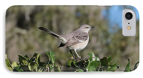 Northern Mockingbird IPhone 7 Case