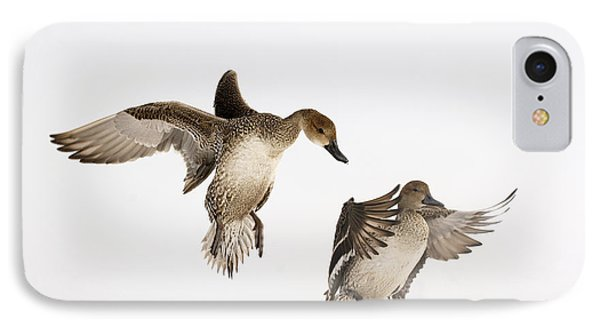 Northern Pintail Anas Acuta Duck IPhone Case