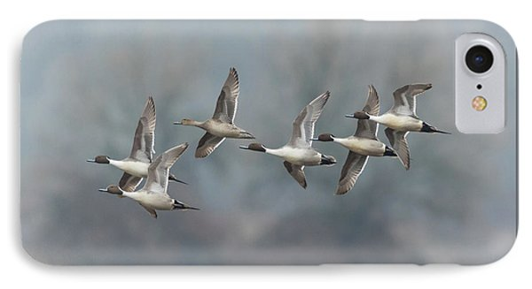 IPhone Case featuring the photograph Northern Pintails In Flight by Angie Vogel