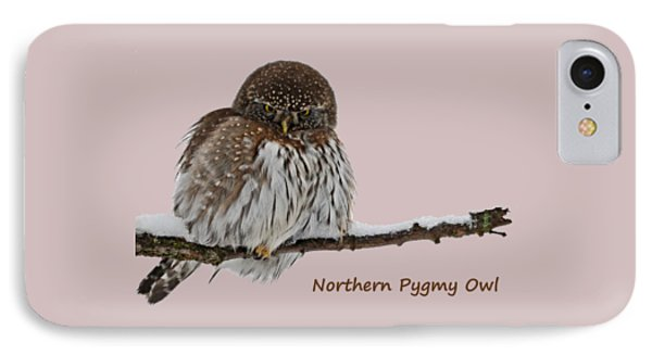 Northern Pygmy Owl 2 IPhone Case
