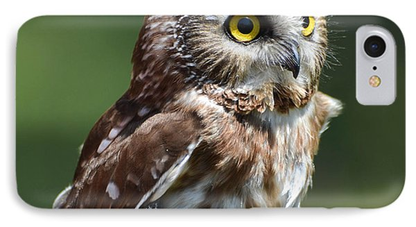 Northern Saw Whet Owl IPhone Case
