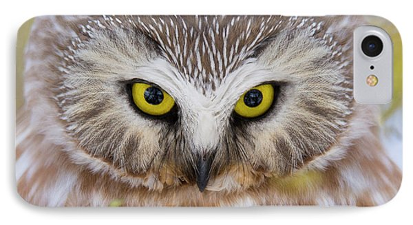 IPhone Case featuring the photograph Northern Saw-whet Owl Portrait by Mircea Costina Photography