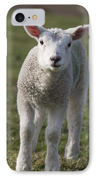Sheep iPhone 7 Case - Northumberland, England A White Lamb by John Short