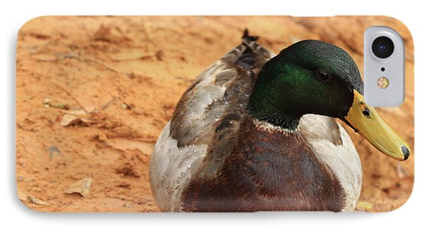 IPhone Case featuring the photograph Number 17 by Kim Henderson