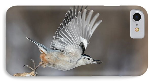 IPhone Case featuring the photograph Nuthatch In Action by Mircea Costina Photography