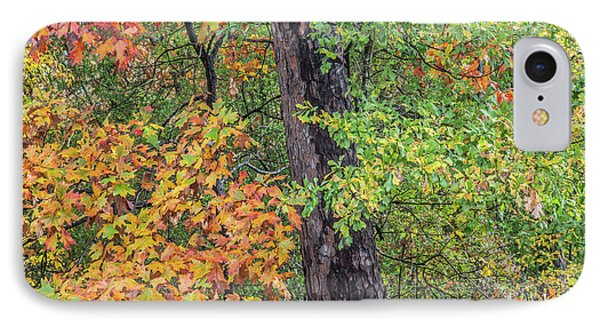 Oak Hickory Woodland IPhone Case by Tim Fitzharris