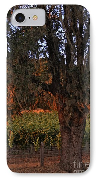 Oak Tree And Vineyards In Knight's Valley Phone Case by Charlene Mitchell