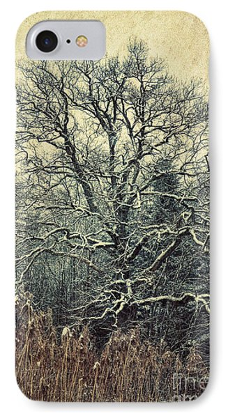 Oak Tree In Winter IPhone Case by Jutta Maria Pusl