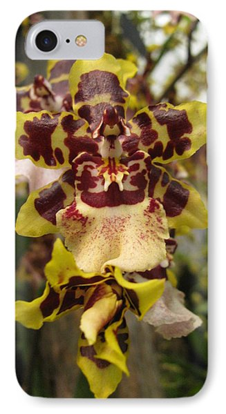 IPhone Case featuring the photograph Odontoglossum Orchid by Alfred Ng