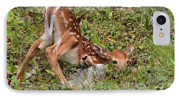 Oh Deer Little Fawn IPhone Case by Debbie Stahre
