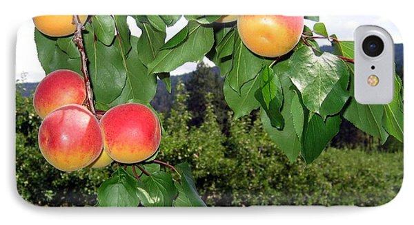 Okanagan Apricots Phone Case by Will Borden