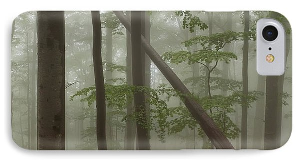 Old Beech Forest Phone Case by Evgeni Dinev