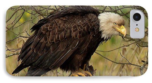 Old Eagle IPhone Case by Sheldon Bilsker