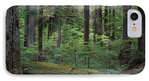 Old Growth Forest IPhone Case by Leland D Howard