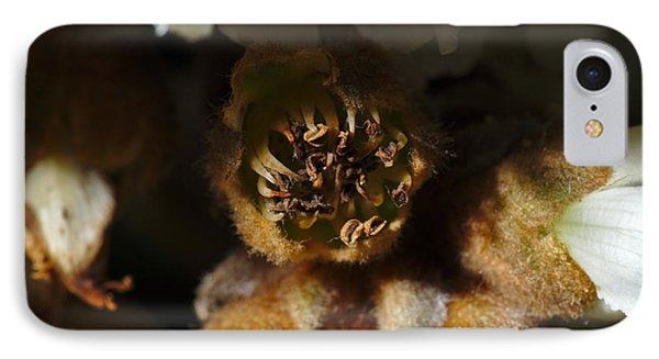 Old Loquat Tree Flower IPhone Case