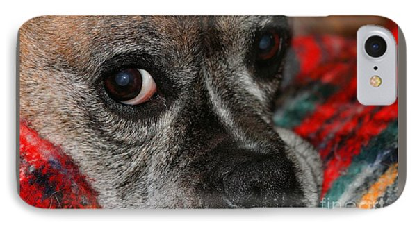 IPhone Case featuring the photograph Old Man Boxer by Debbie Stahre