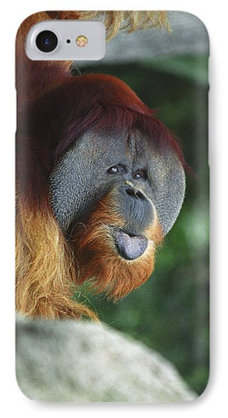 Old Man Of The Forest IPhone Case by Greg Slocum