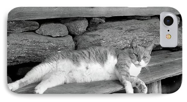 IPhone Case featuring the photograph Old Mill Cat by Sandi OReilly
