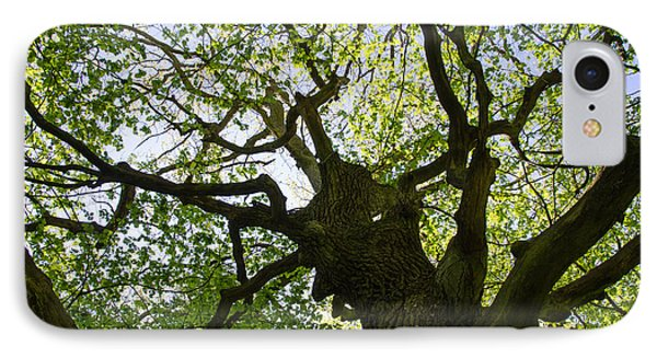 Old Oak Tree IPhone Case by Kennerth and Birgitta Kullman