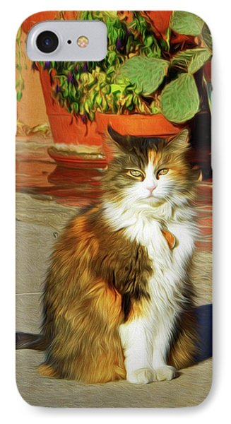 IPhone Case featuring the photograph Old Town Cat by Nikolyn McDonald