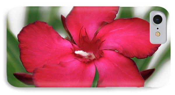 Oleander Blood-red Velvet 1 IPhone Case