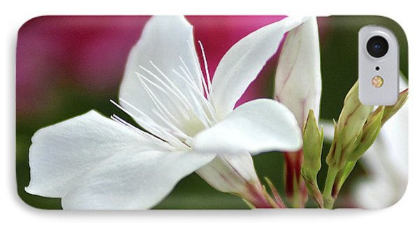IPhone Case featuring the photograph Oleander Casablanca 2 by Wilhelm Hufnagl