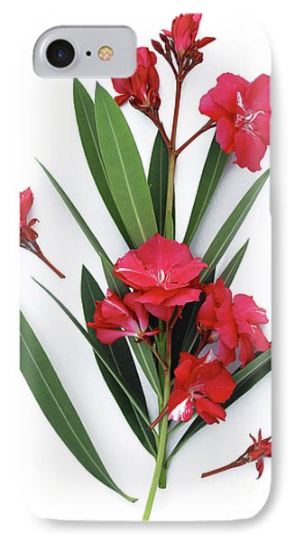 IPhone Case featuring the photograph Oleander Geant Des Batailles 2 by Wilhelm Hufnagl