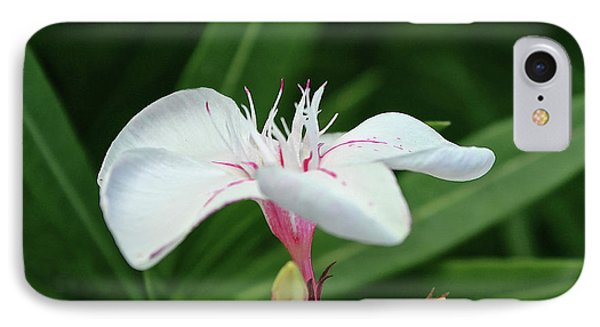 Oleander Harriet Newding  1 IPhone Case by Wilhelm Hufnagl