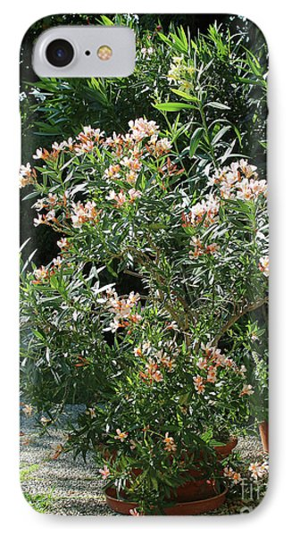 Oleander Petite Salmon 4 IPhone Case by Wilhelm Hufnagl
