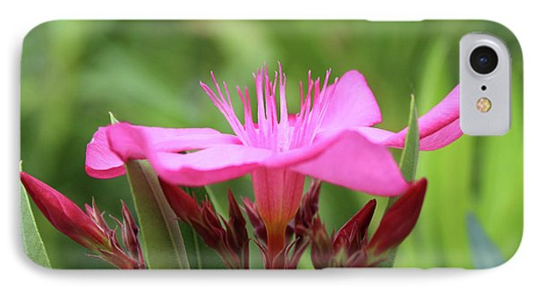 Oleander Professor Parlatore 1 IPhone Case by Wilhelm Hufnagl