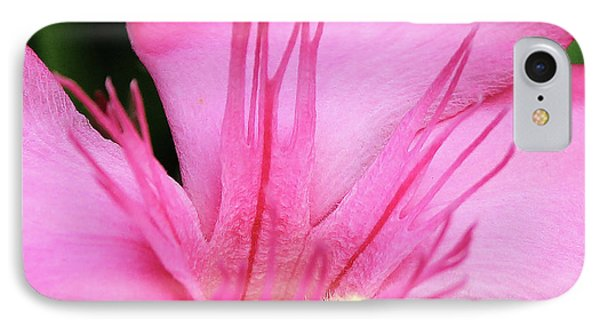 Oleander Professor Parlatore 3 IPhone Case by Wilhelm Hufnagl