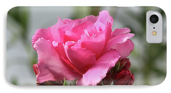 Oleander Splendens Giganteum 2 IPhone Case by Wilhelm Hufnagl
