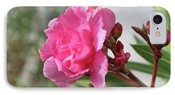 Oleander Splendens Giganteum 4 IPhone Case by Wilhelm Hufnagl