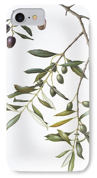 Olive IPhone Case by Margaret Ann Eden