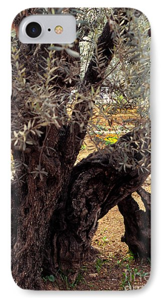 Olive Tree In The Garden Of Gethsemane Phone Case by Thomas R Fletcher