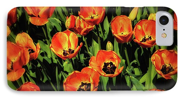 Tulip iPhone 7 Case - Open Wide - Tulips On Display by Tom Mc Nemar