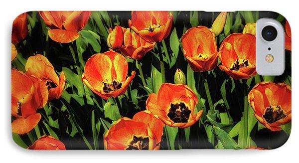 Open Wide - Tulips On Display IPhone Case by Tom Mc Nemar